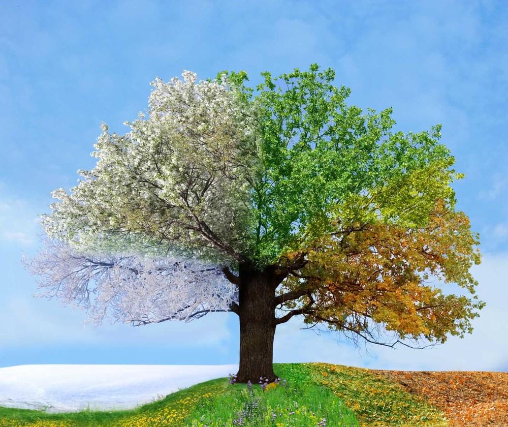 élő fa ízületi kezelés